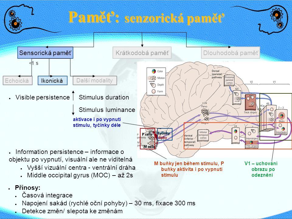 Paměť: senzorická paměť
