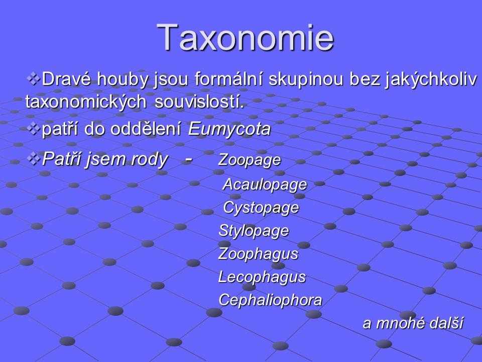 Taxonomie Dravé houby jsou formální skupinou bez jakýchkoliv taxonomických souvislostí. patří do oddělení Eumycota.
