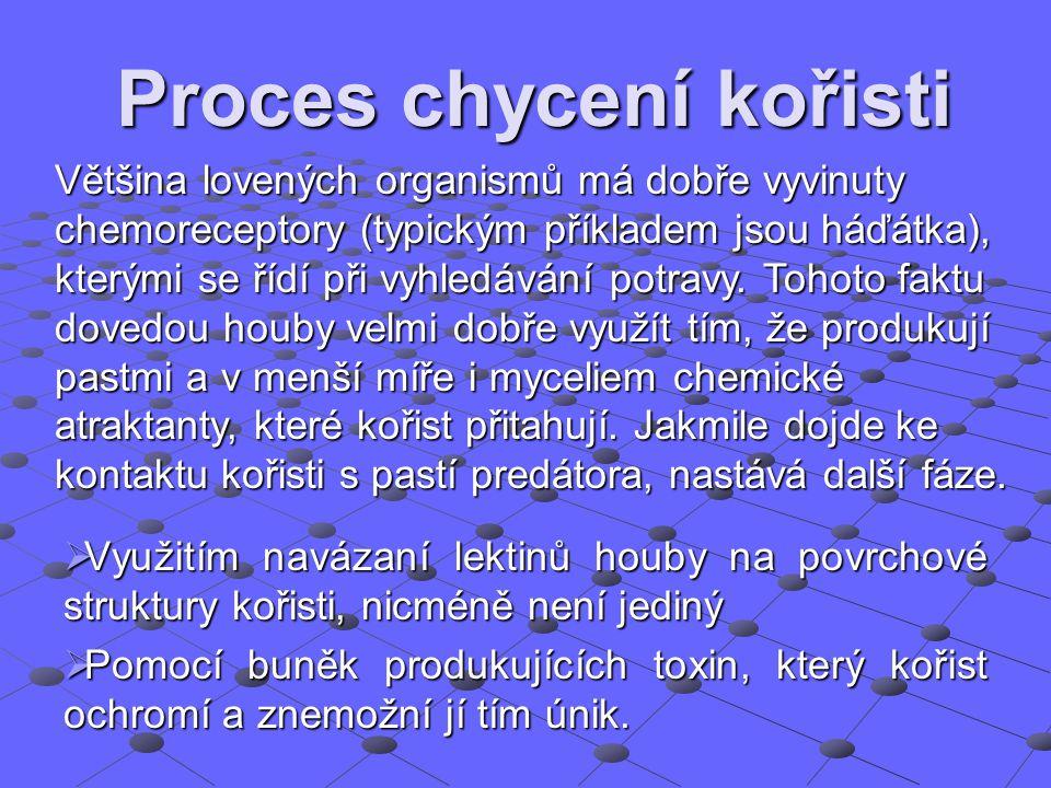 Proces chycení kořisti