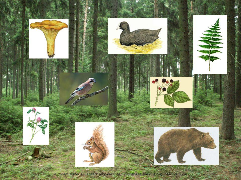 liška obecná – houba, kapradina, ostružiník křovitý, veverka obecná, medvěd hnědý, sojka obecná