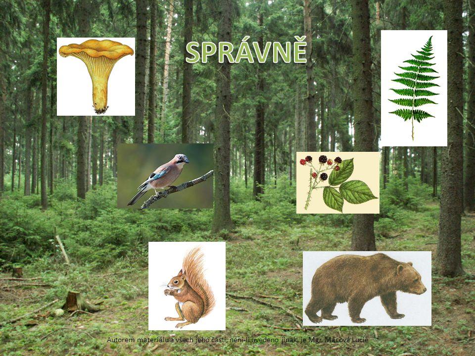 SPRÁVNĚ liška obecná – houba, kapradina, ostružiník křovitý, veverka obecná, medvěd hnědý, sojka obecná.