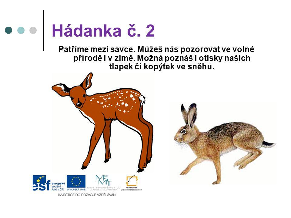 Hádanka č. 2 Patříme mezi savce. Můžeš nás pozorovat ve volné přírodě i v zimě.