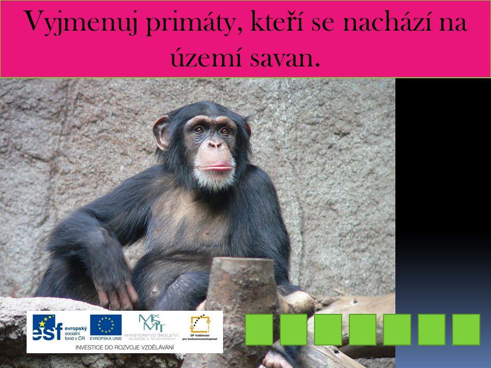 Vyjmenuj primáty, kteří se nachází na území savan.