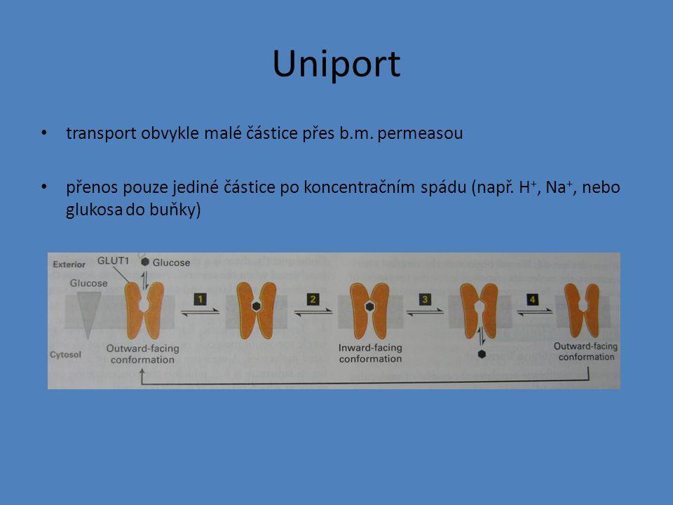 Uniport transport obvykle malé částice přes b.m. permeasou