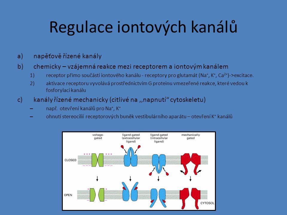 Regulace iontových kanálů