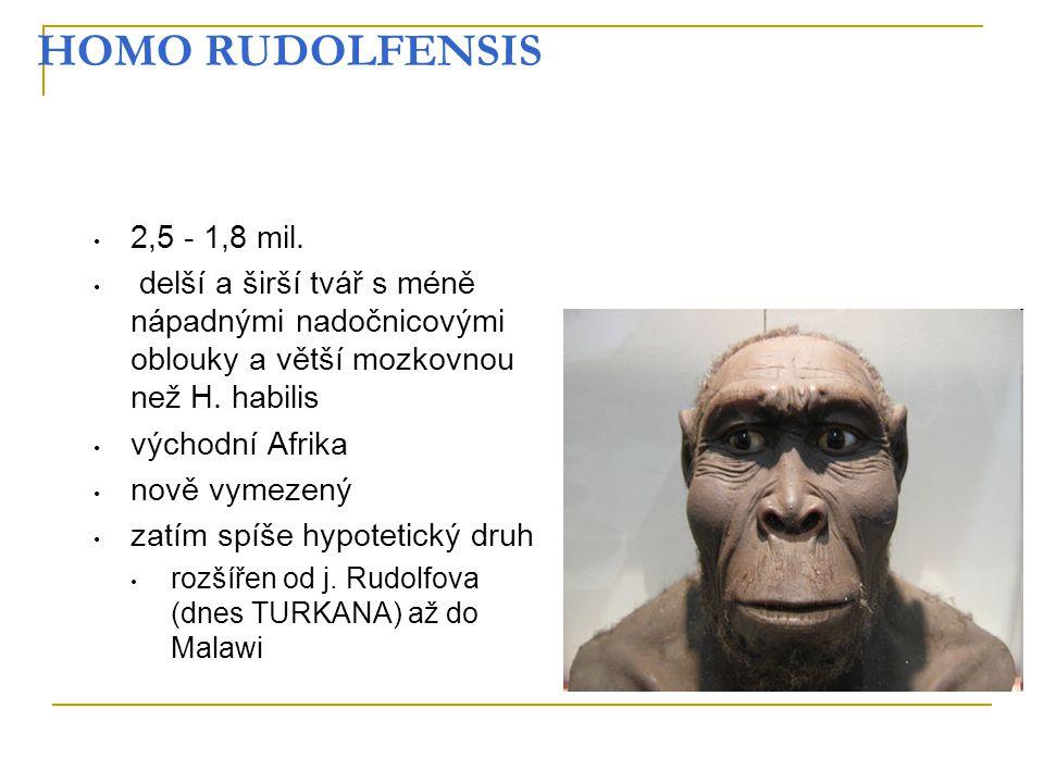 HOMO RUDOLFENSIS 2,5 - 1,8 mil. delší a širší tvář s méně nápadnými nadočnicovými oblouky a větší mozkovnou než H. habilis.