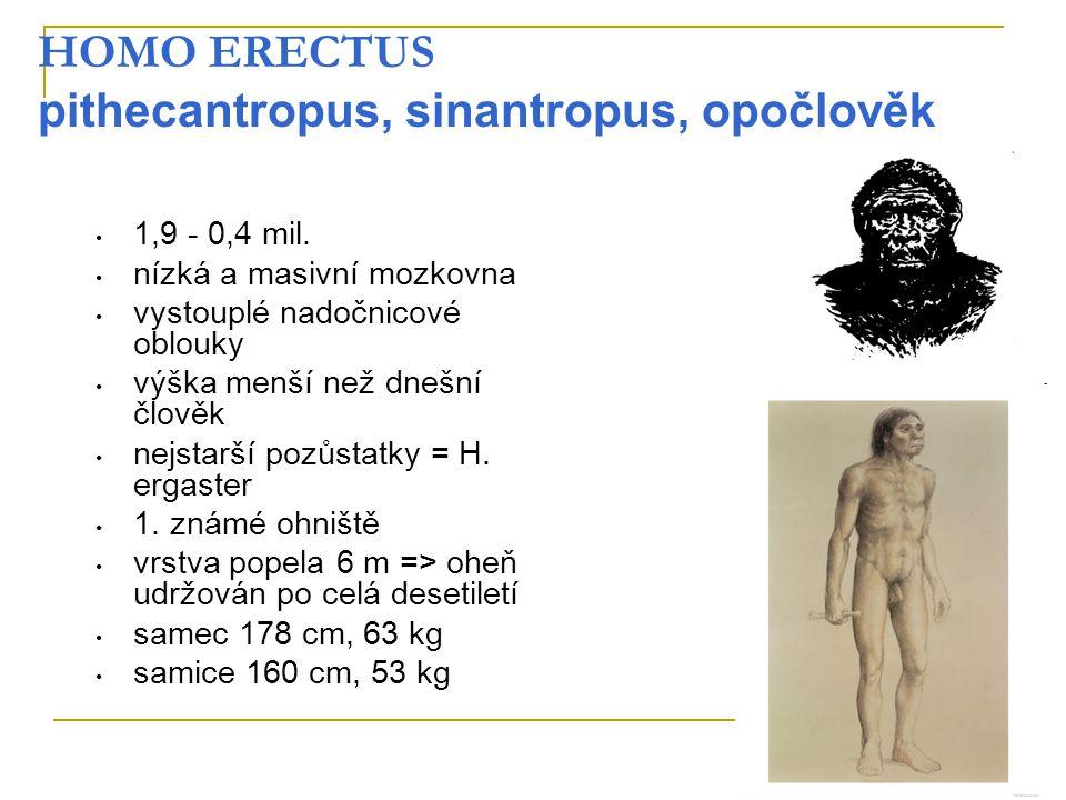 HOMO ERECTUS pithecantropus, sinantropus, opočlověk