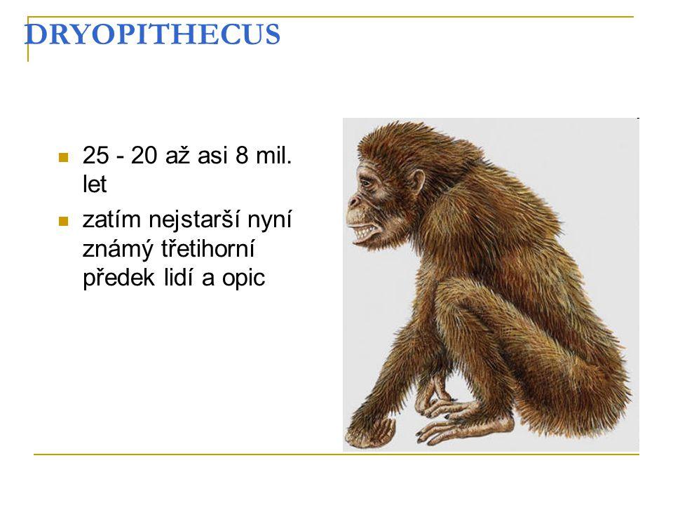 DRYOPITHECUS 25 - 20 až asi 8 mil. let