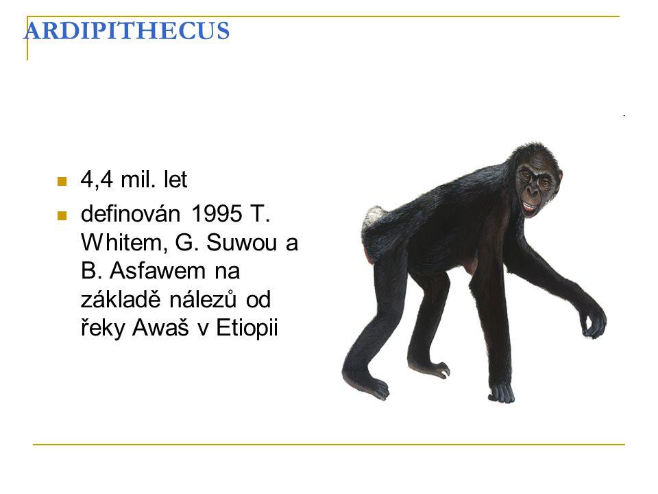 ARDIPITHECUS 4,4 mil. let. definován 1995 T. Whitem, G.