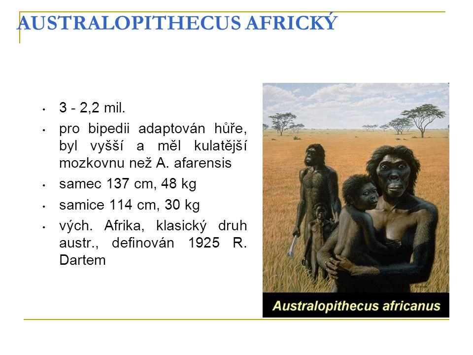 AUSTRALOPITHECUS AFRICKÝ
