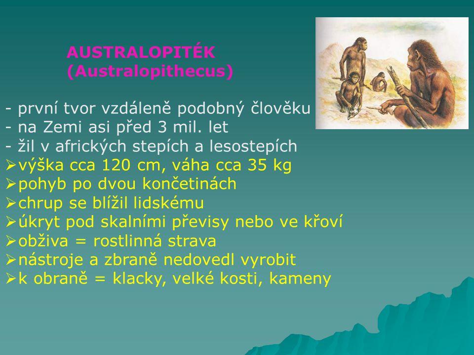 AUSTRALOPITÉK (Australopithecus) první tvor vzdáleně podobný člověku. na Zemi asi před 3 mil. let.
