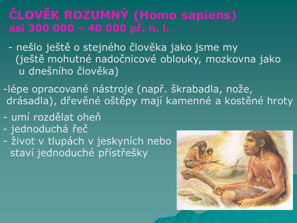 ČLOVĚK ROZUMNÝ (Homo sapiens)