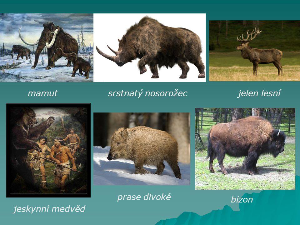 mamut srstnatý nosorožec jelen lesní prase divoké bizon jeskynní medvěd