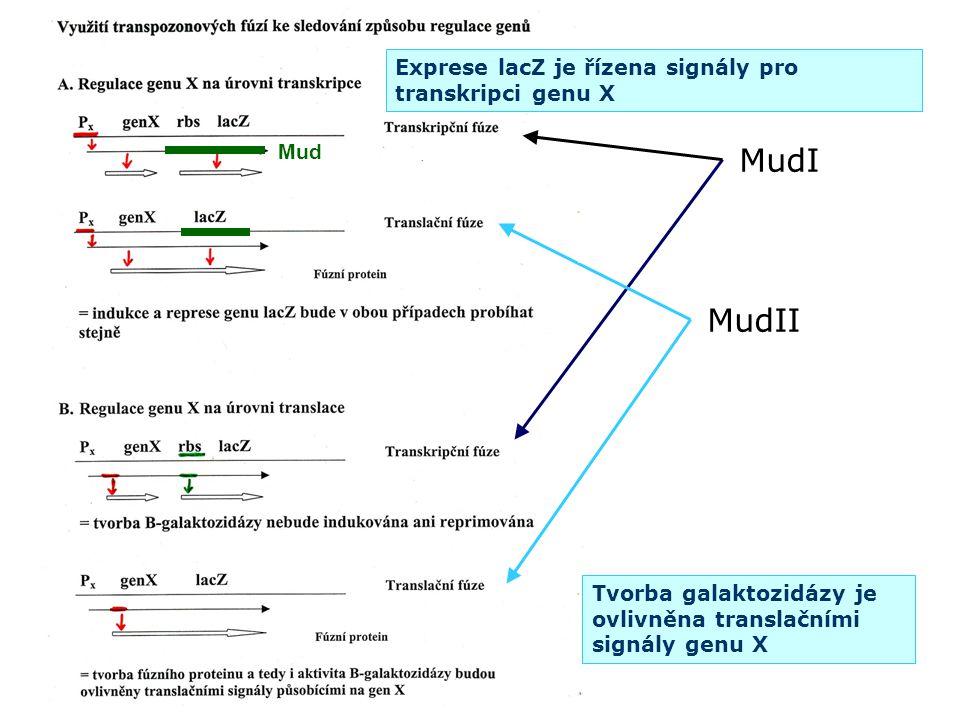 MudI MudII Exprese lacZ je řízena signály pro transkripci genu X Mud