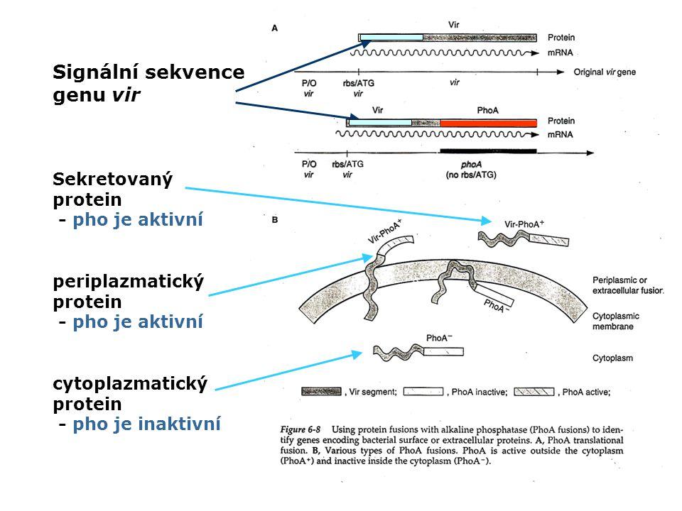 Signální sekvence genu vir