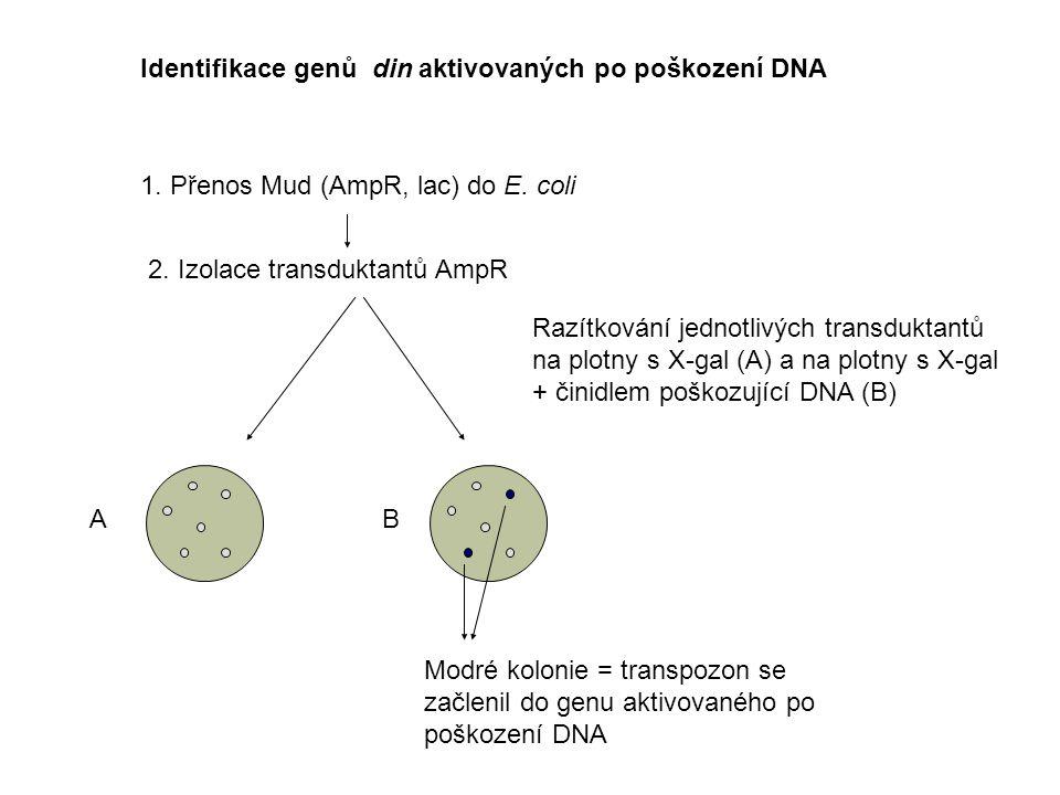 Identifikace genů din aktivovaných po poškození DNA