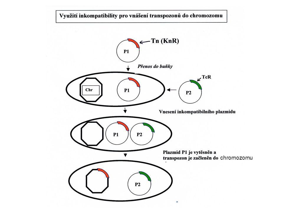 chromozomu
