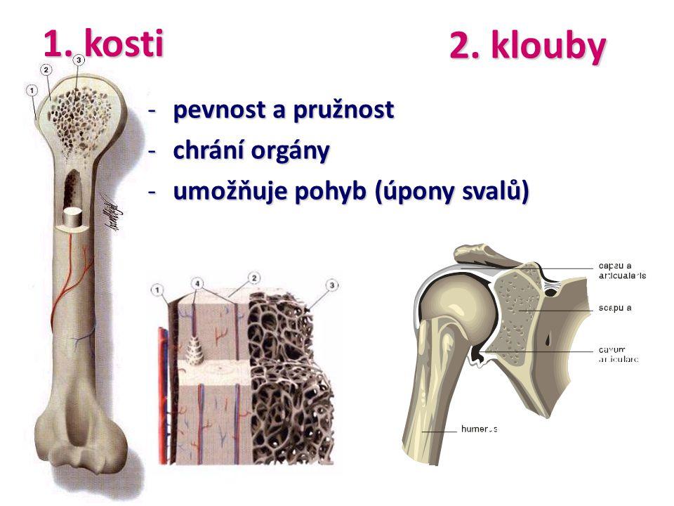 1. kosti 2. klouby pevnost a pružnost chrání orgány