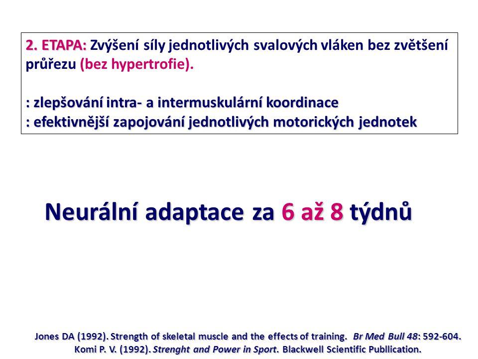 Neurální adaptace za 6 až 8 týdnů