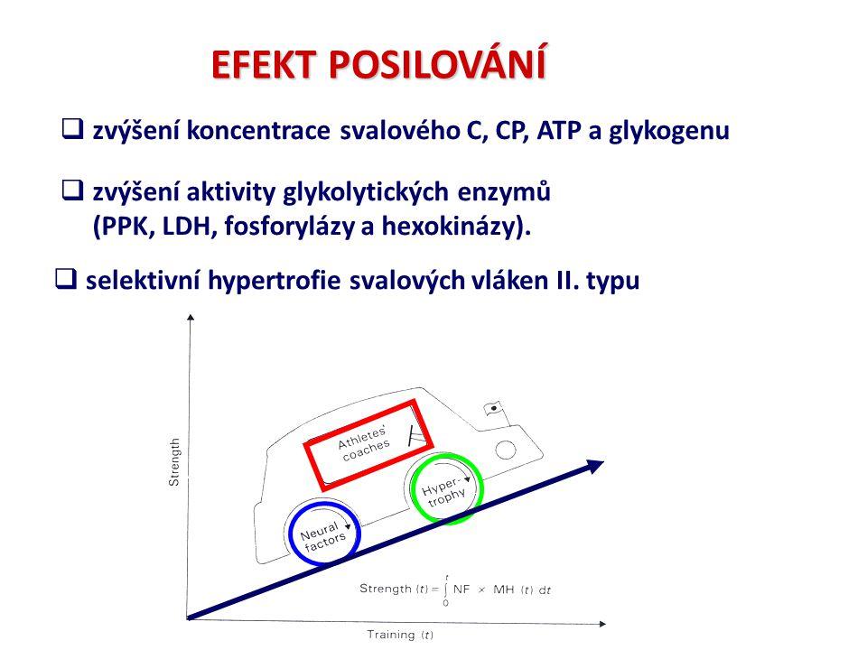 EFEKT POSILOVÁNÍ zvýšení koncentrace svalového C, CP, ATP a glykogenu