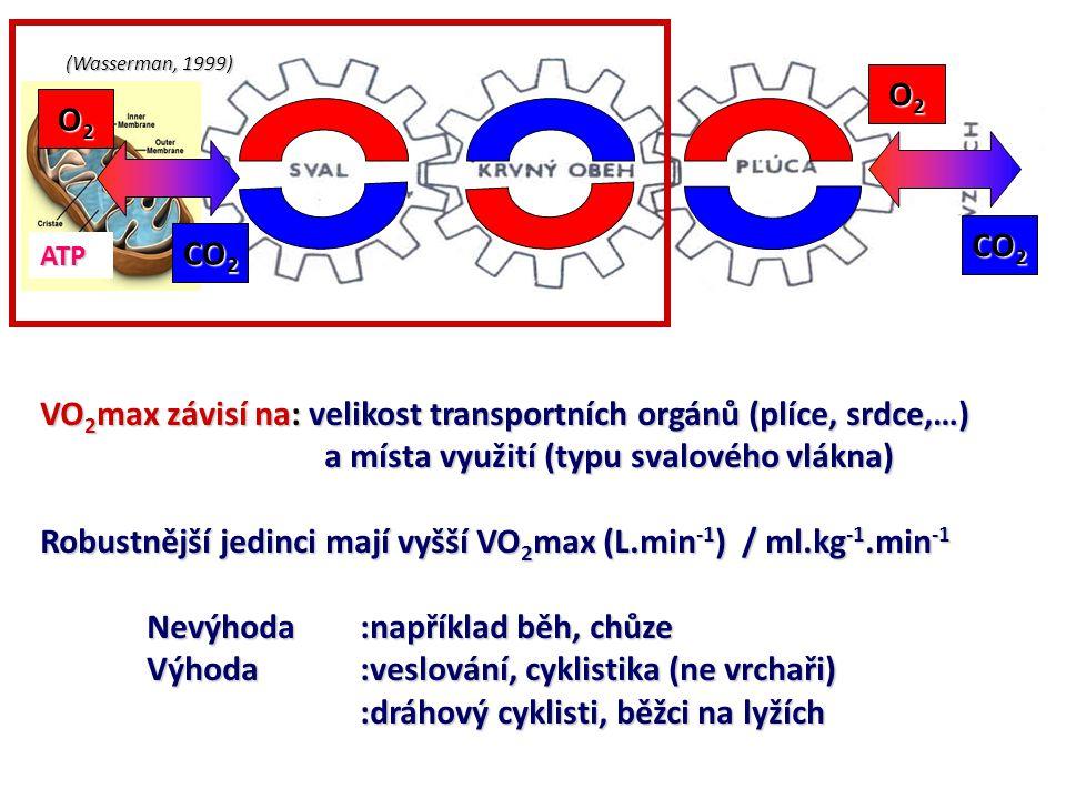 VO2max závisí na: velikost transportních orgánů (plíce, srdce,…)