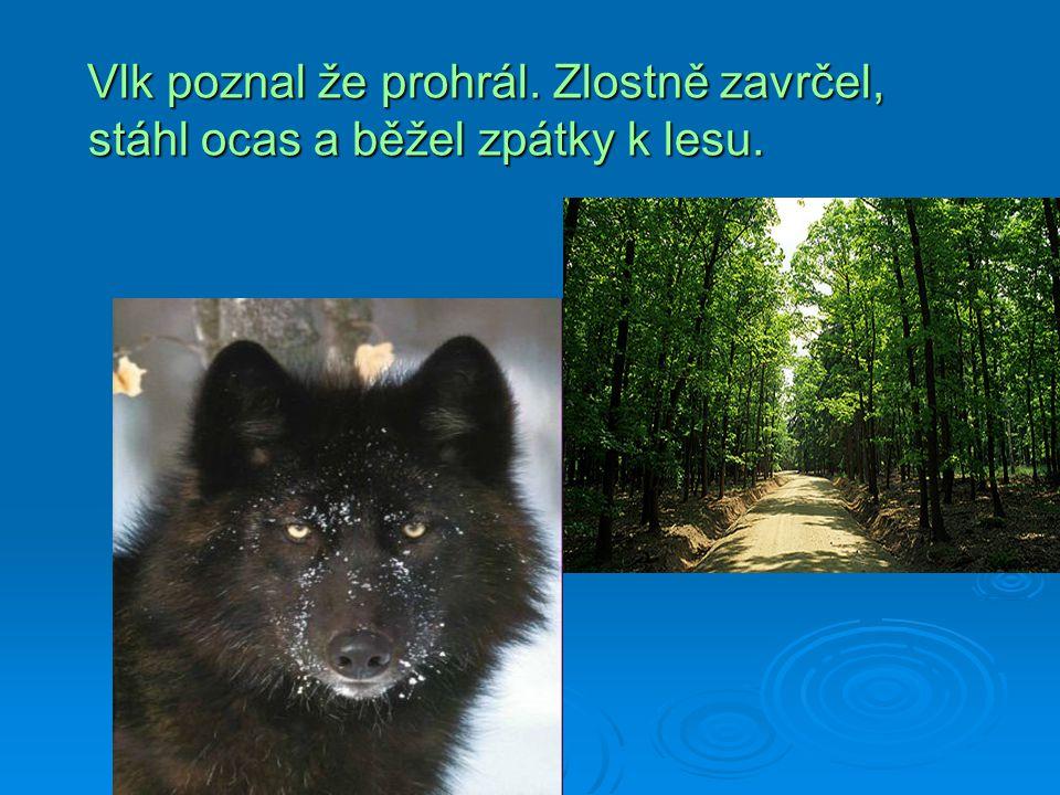 Vlk poznal že prohrál. Zlostně zavrčel, stáhl ocas a běžel zpátky k lesu.