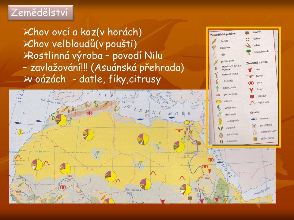 Zemědělství Chov ovcí a koz(v horách) Chov velbloudů(v poušti) Rostlinná výroba – povodí Nilu. – zavlažování!!! (Asuánská přehrada)