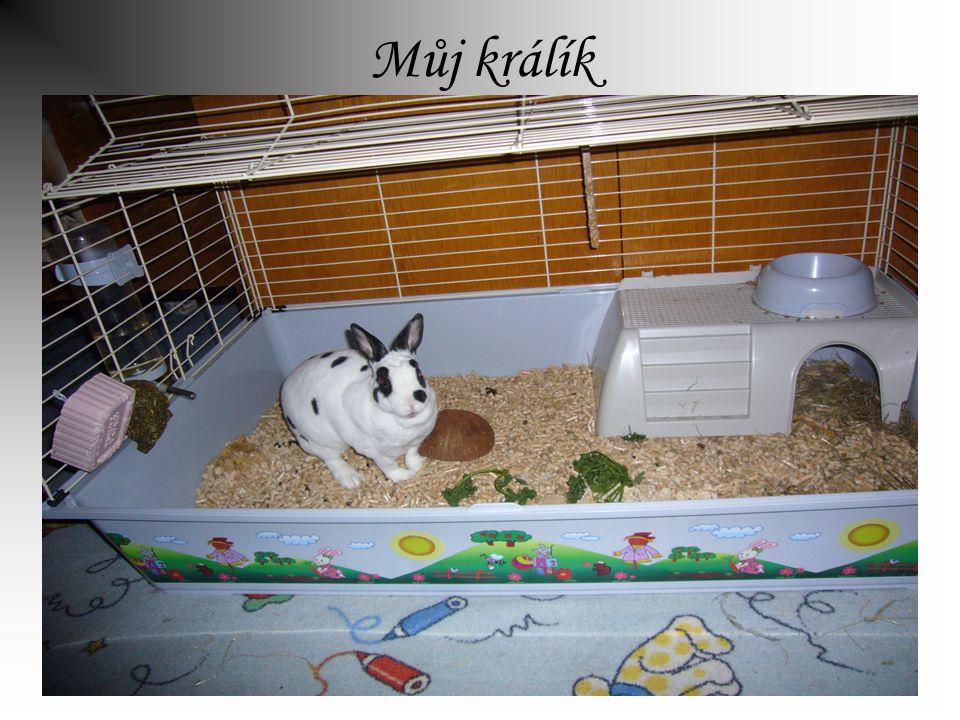 Můj králík