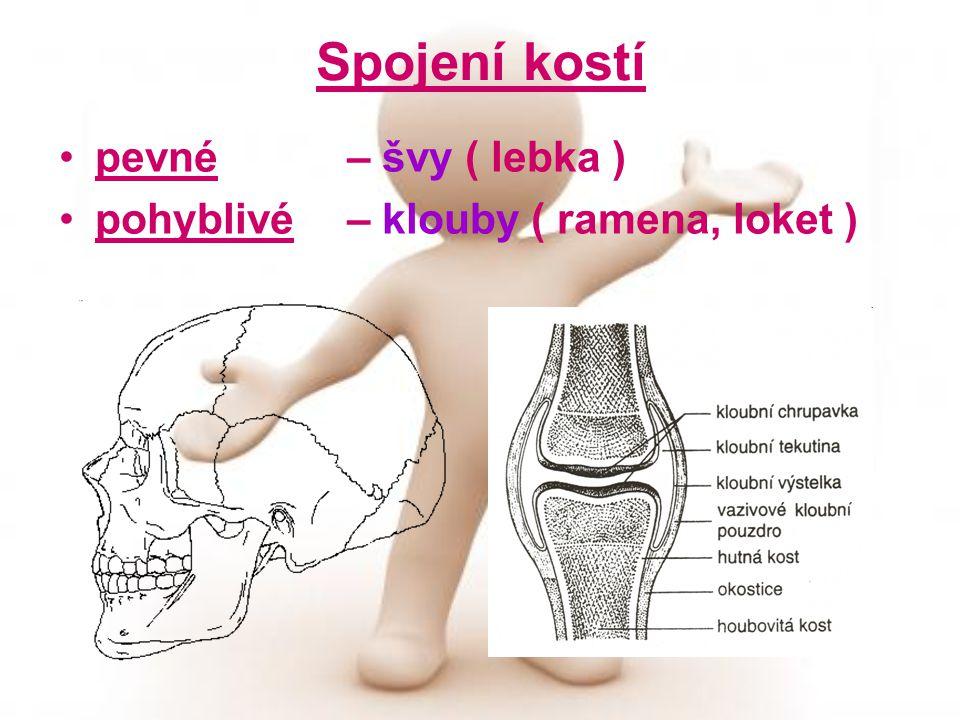 Spojení kostí pevné – švy ( lebka )