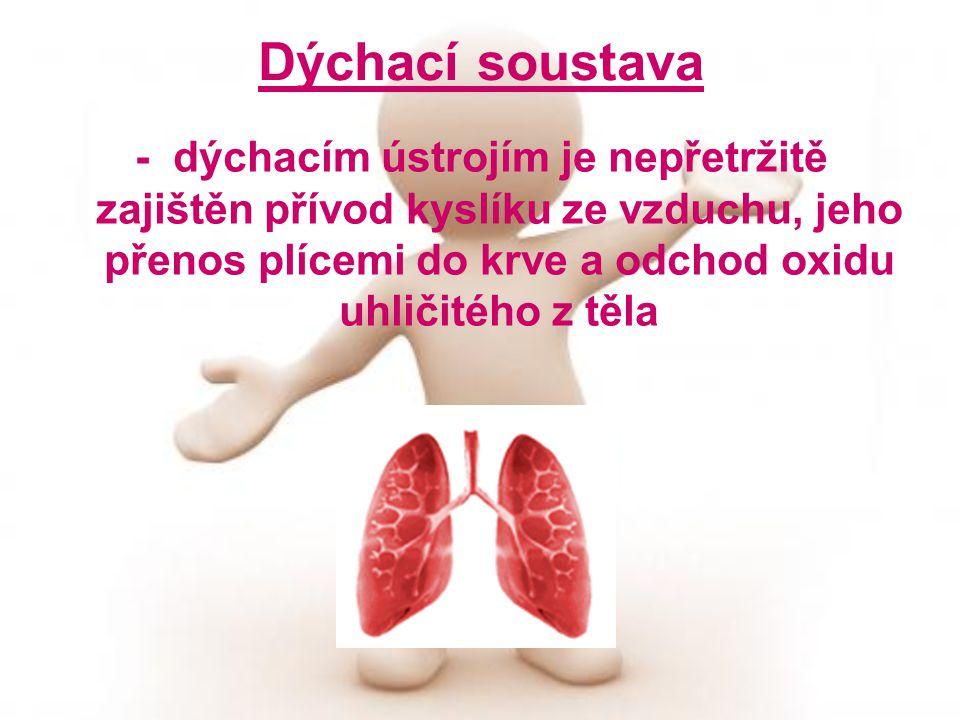 Dýchací soustava - dýchacím ústrojím je nepřetržitě zajištěn přívod kyslíku ze vzduchu, jeho přenos plícemi do krve a odchod oxidu uhličitého z těla.