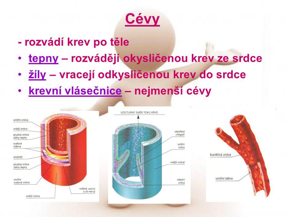 Cévy - rozvádí krev po těle