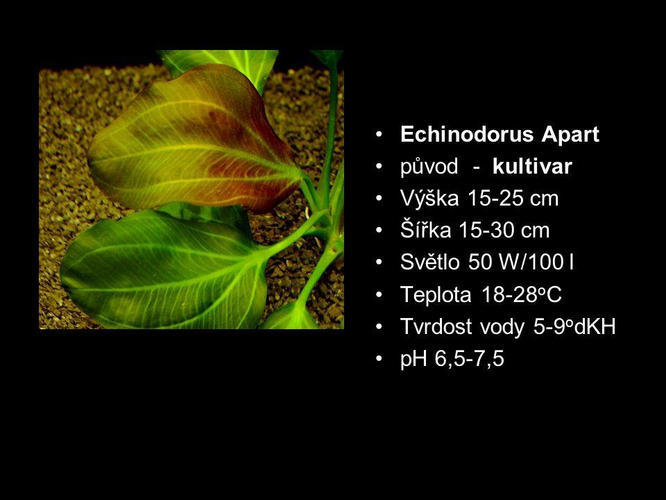 Echinodorus Apart původ - kultivar. Výška 15-25 cm. Šířka 15-30 cm. Světlo 50 W/100 l. Teplota 18-28oC.