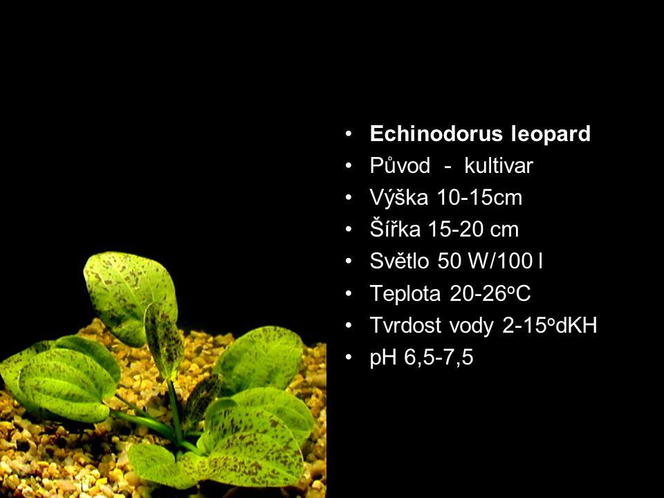 Echinodorus leopard Původ - kultivar. Výška 10-15cm. Šířka 15-20 cm. Světlo 50 W/100 l. Teplota 20-26oC.