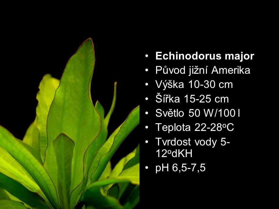 Echinodorus major Původ jižní Amerika. Výška 10-30 cm. Šířka 15-25 cm. Světlo 50 W/100 l. Teplota 22-28oC.