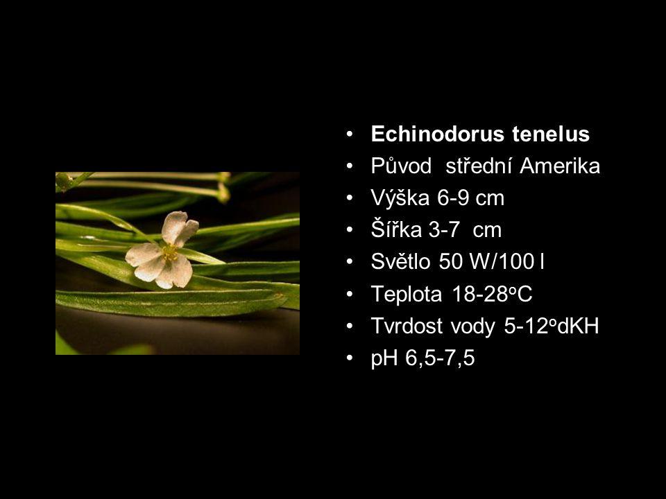Echinodorus tenelus Původ střední Amerika. Výška 6-9 cm. Šířka 3-7 cm. Světlo 50 W/100 l. Teplota 18-28oC.