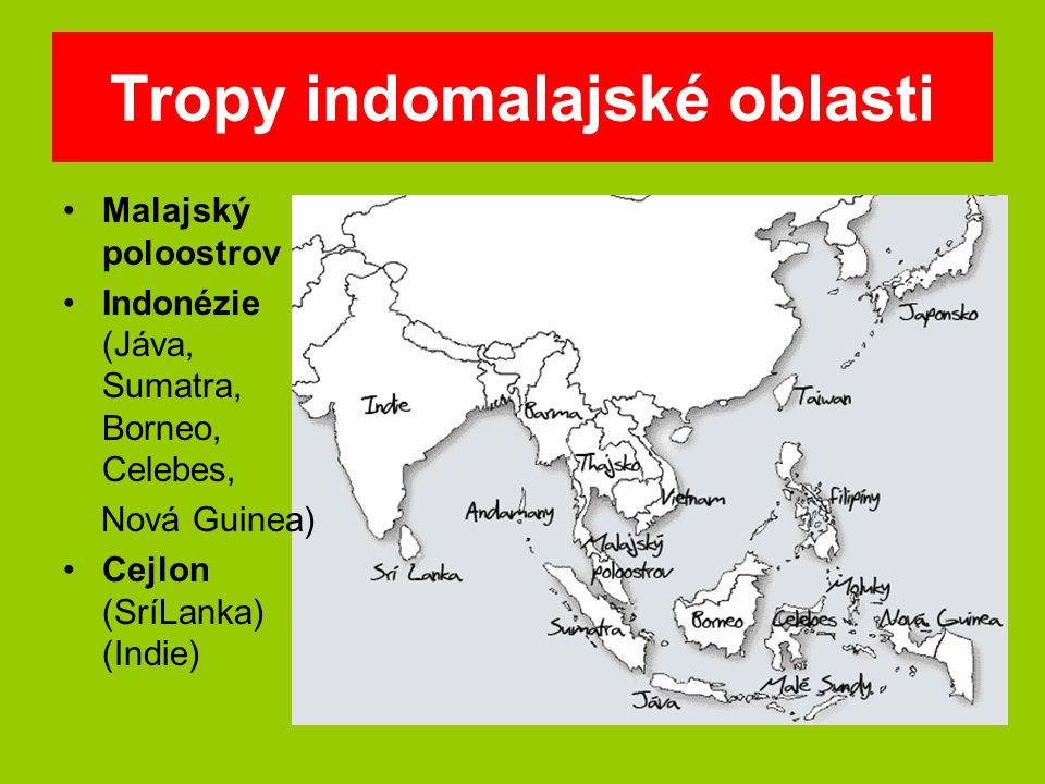 Tropy indomalajské oblasti
