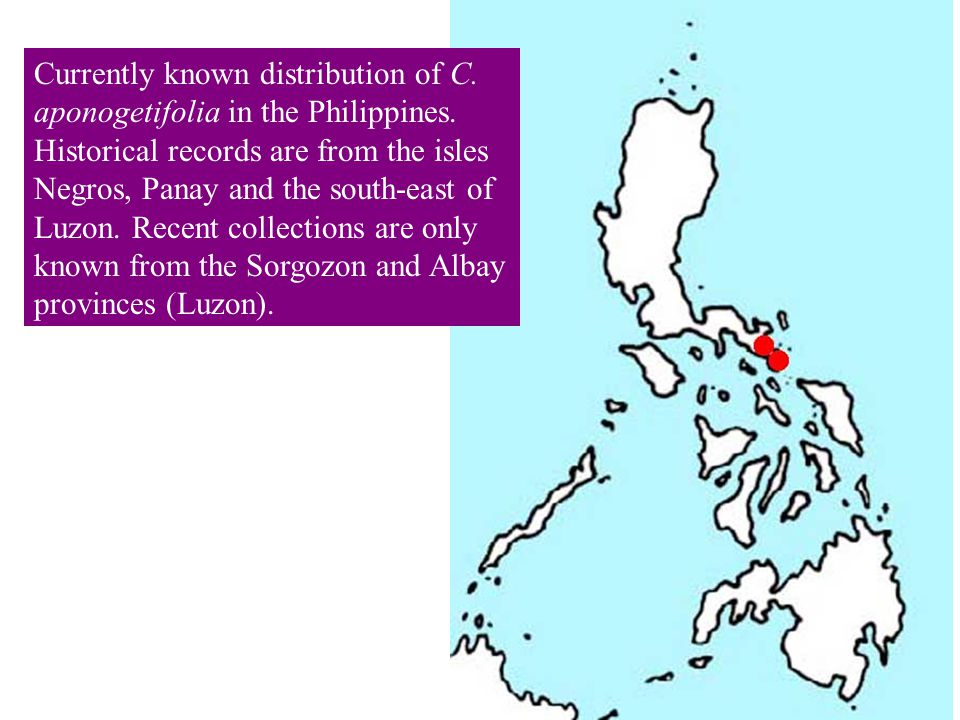 Currently known distribution of C. aponogetifolia in the Philippines