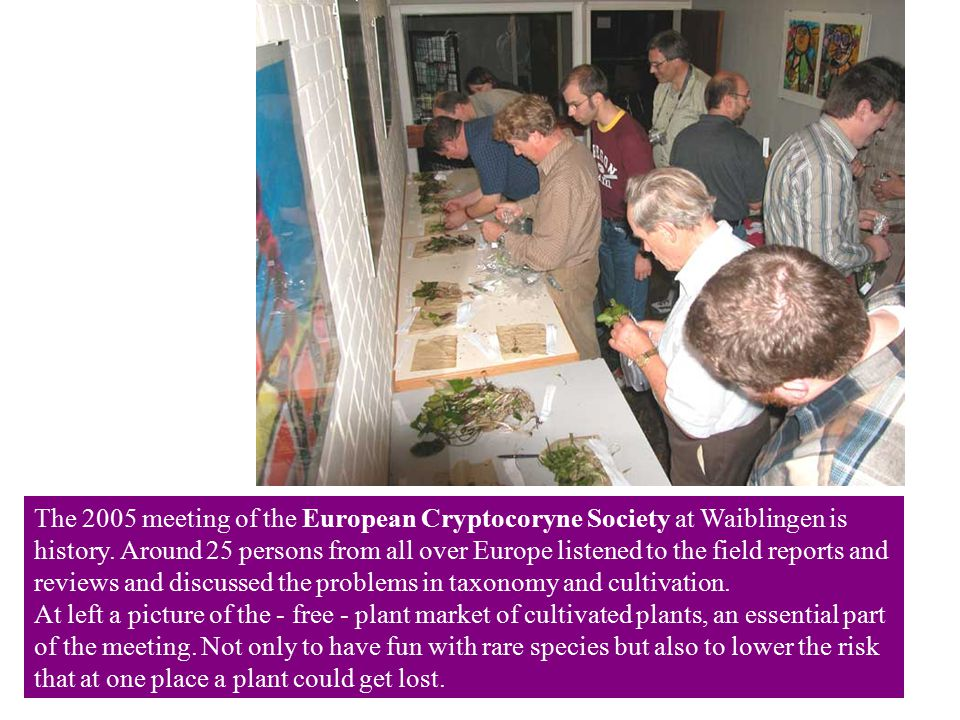 The 2005 meeting of the European Cryptocoryne Society at Waiblingen is history.
