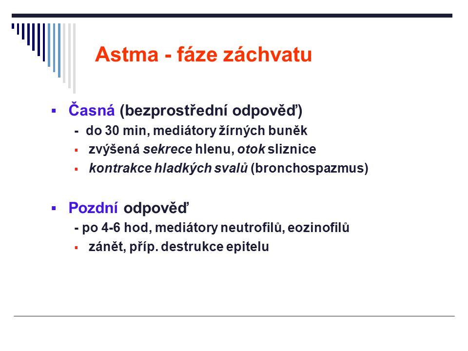 Astma - fáze záchvatu Časná (bezprostřední odpověď) Pozdní odpověď