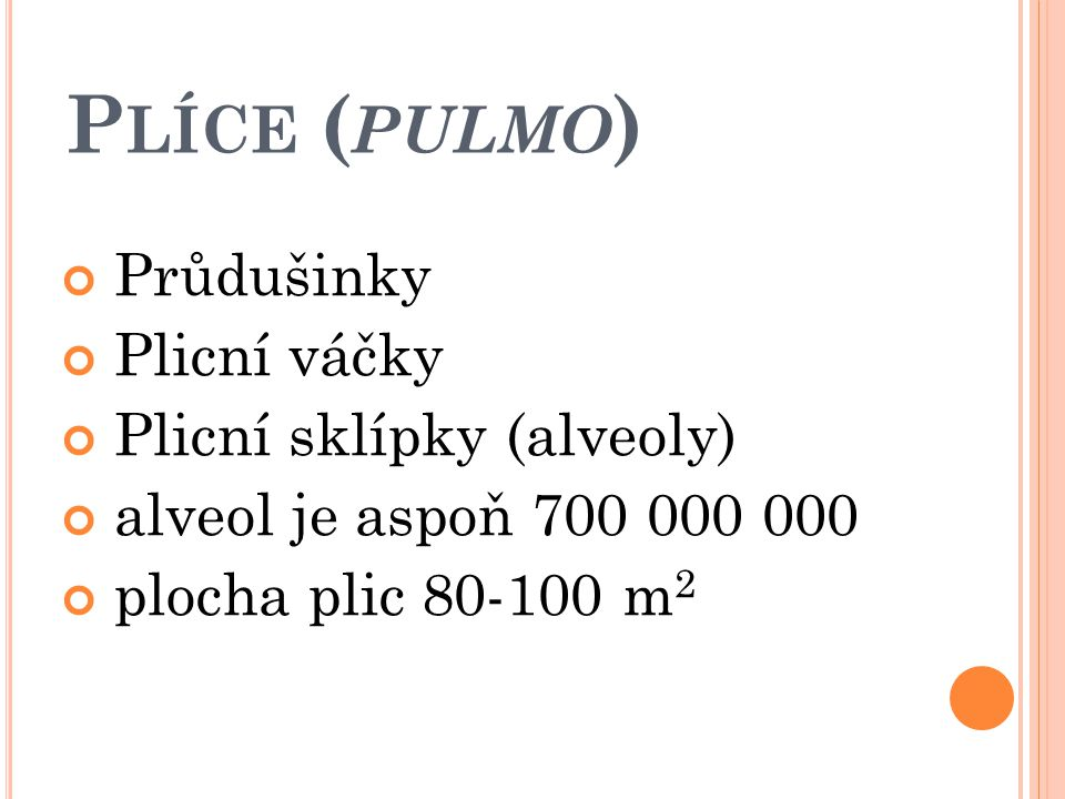 Plíce (pulmo) Průdušinky Plicní váčky Plicní sklípky (alveoly)