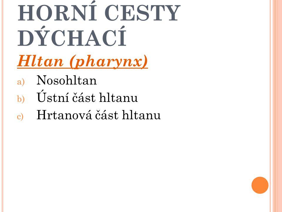 HORNÍ CESTY DÝCHACÍ Hltan (pharynx) Nosohltan Ústní část hltanu