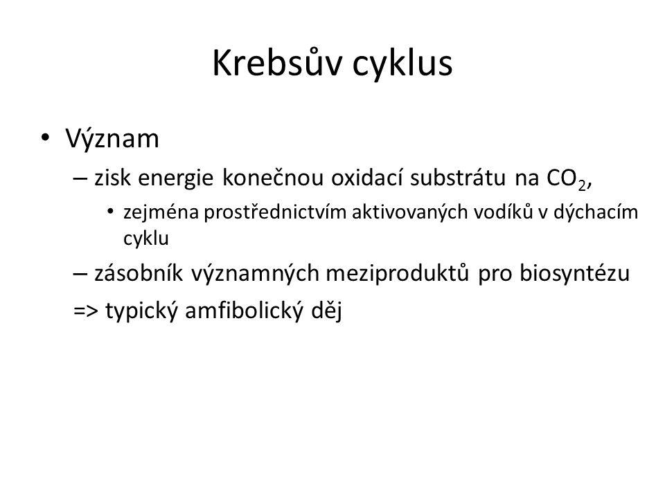 Krebsův cyklus Význam zisk energie konečnou oxidací substrátu na CO2,