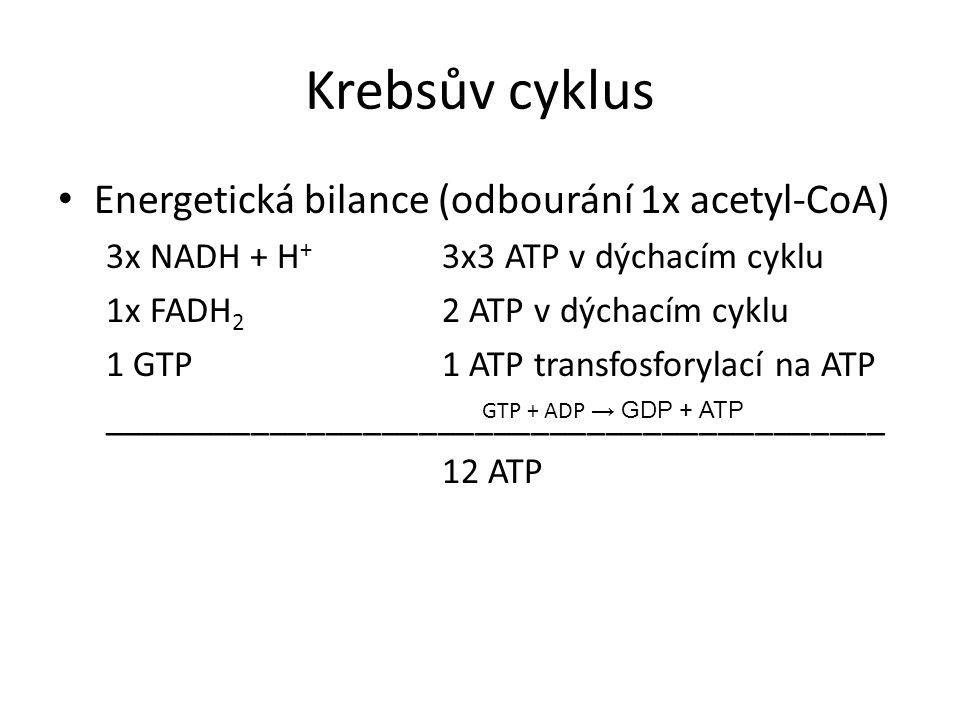 Krebsův cyklus Energetická bilance (odbourání 1x acetyl-CoA)