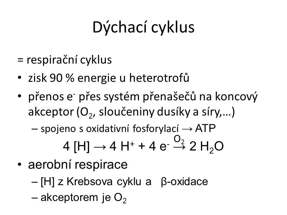 Dýchací cyklus = respirační cyklus zisk 90 % energie u heterotrofů