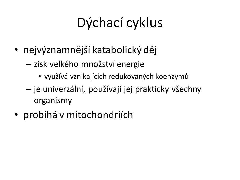 Dýchací cyklus nejvýznamnější katabolický děj probíhá v mitochondriích