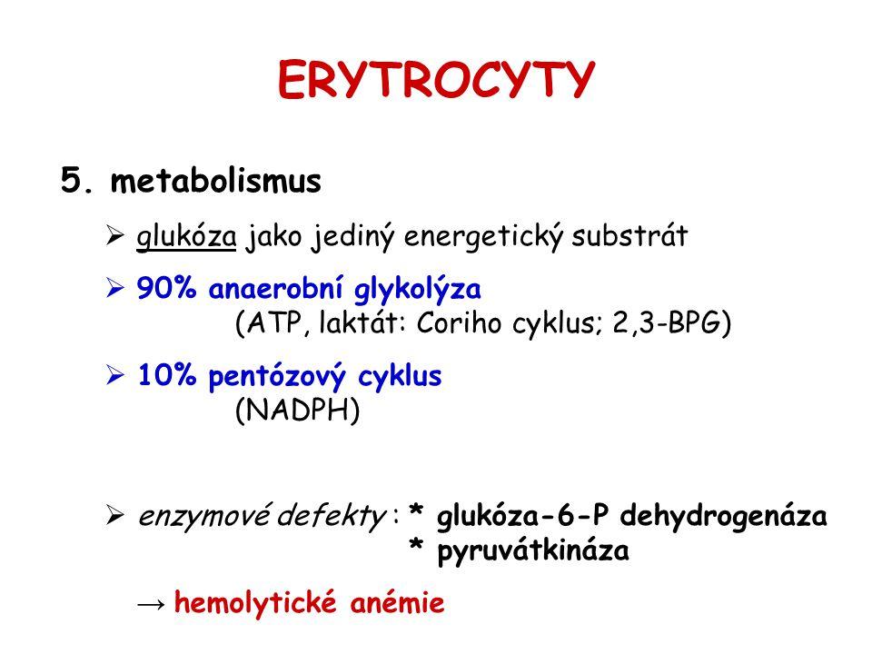 ERYTROCYTY metabolismus glukóza jako jediný energetický substrát