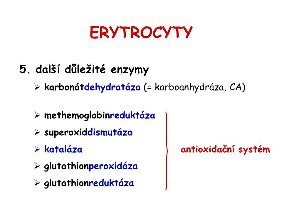 ERYTROCYTY další důležité enzymy