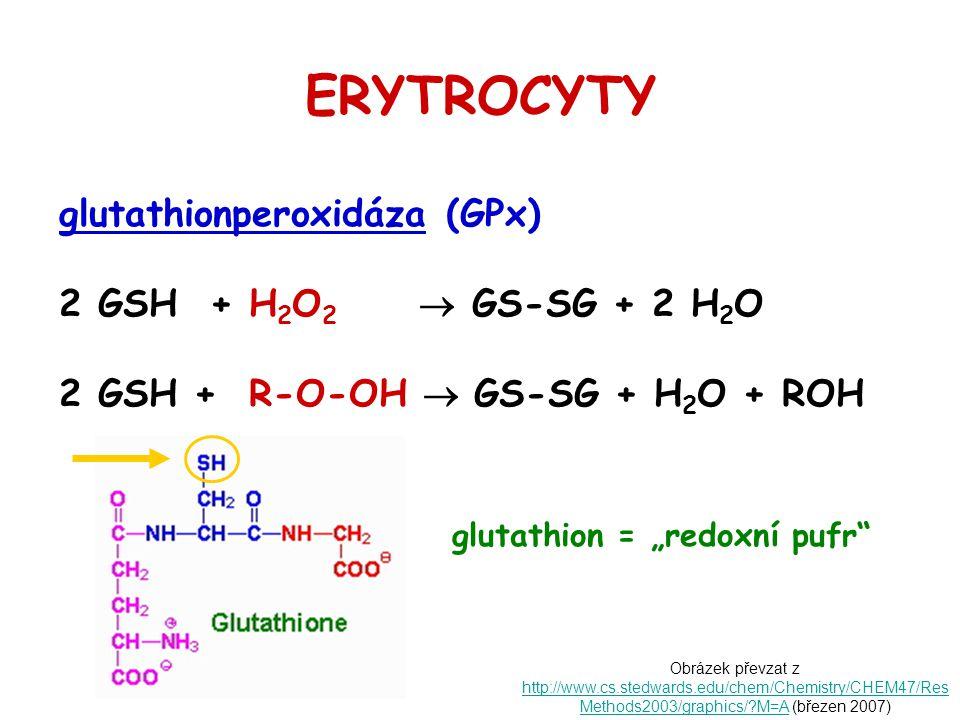ERYTROCYTY glutathionperoxidáza (GPx) 2 GSH + H2O2  GS-SG + 2 H2O