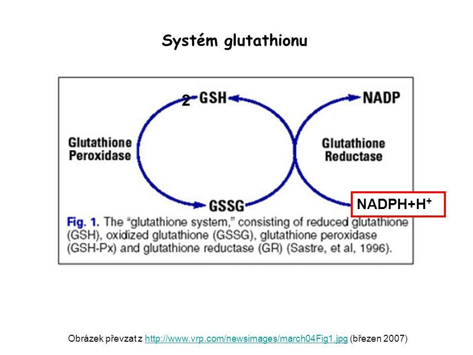 Systém glutathionu 2 NADPH+H+
