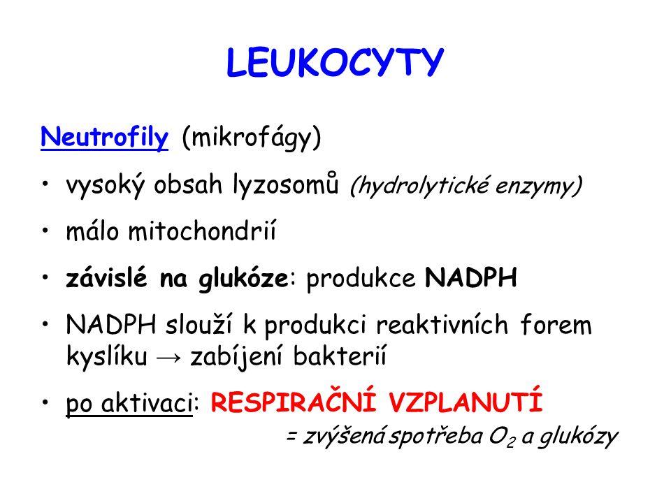 LEUKOCYTY Neutrofily (mikrofágy)